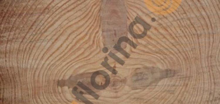 Το σχήμα του Σταυρού εμφανίστηκε στον κορμό ενός δέντρου (pics)