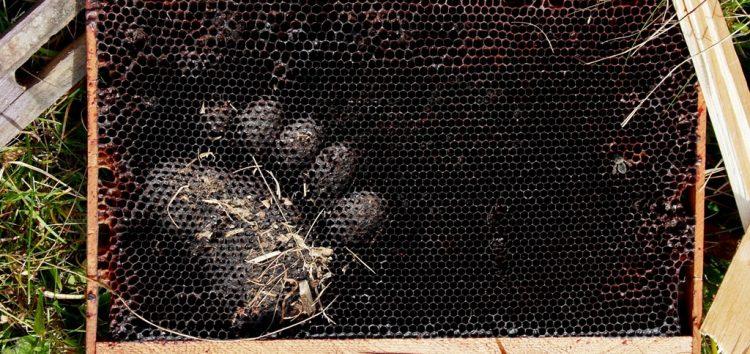 Πώς αντιμετωπίζουν οι χώρες της Ευρώπης τις ζημιές αρκούδων στο ζωικό και φυτικό κεφάλαιο