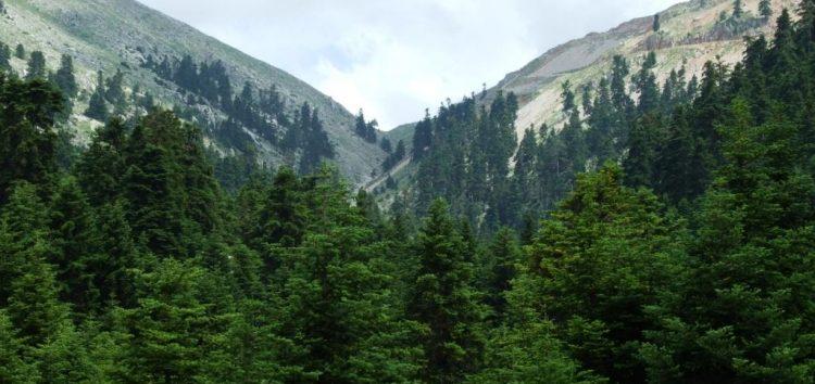 Απαγόρευση κυκλοφορίας σε εθνικούς δρυμούς, δάση και ευπαθείς περιοχές