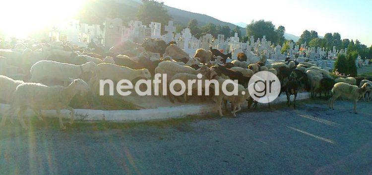 Εικόνες ντροπής στα κοιμητήρια της Φλώρινας (pics)