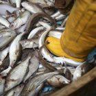 Σύλληψη δύο αλλοδαπών για παράνομη αλιεία στη μικρή Πρέσπα