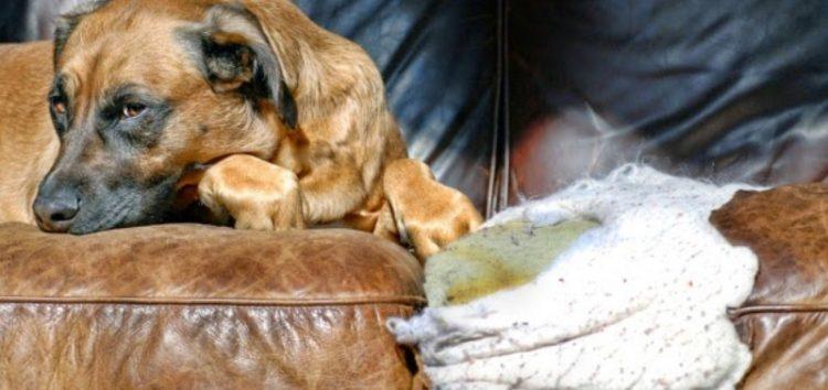 Γιατί ο σκύλος μας «τρώει» το σπίτι – Τρόποι αντιμετώπισης