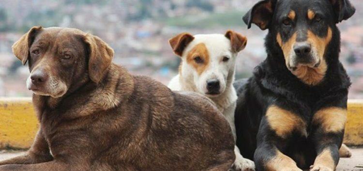 Στείρωση αδέσποτων ζώων στον δήμο Αμυνταίου