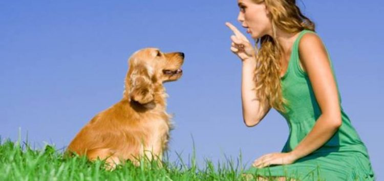Εκπαίδευση σκύλου: προκατάληψη, ρόλος ιδιοκτήτη και τί είναι πραγματικά