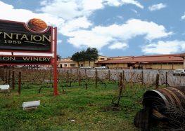 Θέση πωλητή – πωλήτριας από το οινοποιείο του Αγροτικού Συνεταιρισμού Ευρύτερης Περιοχής Αμυνταίου