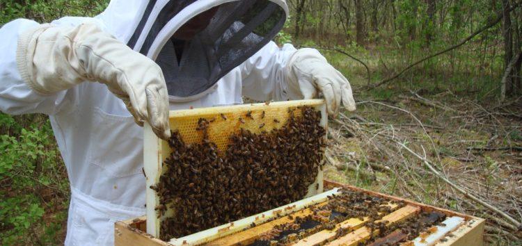 Ενημέρωση για τους μελισσοκόμους της περιοχής Φλώρινας
