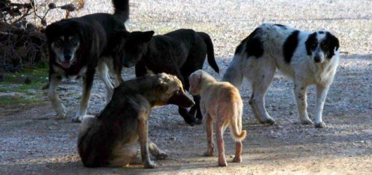 Αντιδήμαρχοι από τη Δυτική Μακεδονία συζήτησαν το θέμα των αδέσποτων ζώων