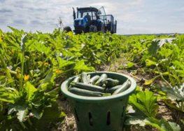 Προγράμματα βιολογικής γεωργίας και κτηνοτροφίας από τον Αγροτικό Συνεταιρισμό Αμυνταίου