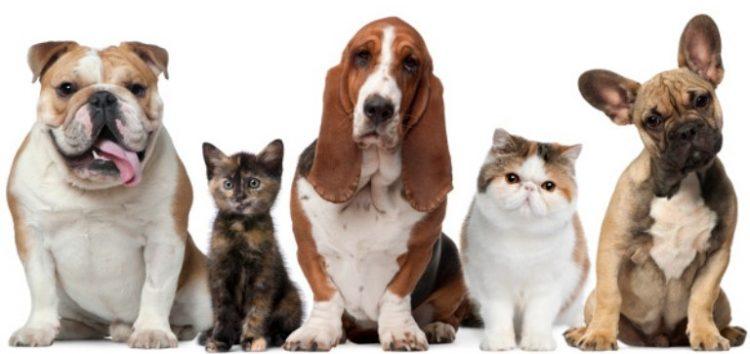 Ξεκινούν έλεγχοι για τα δεσποζόμενα ζώα στο δήμο Φλώρινας