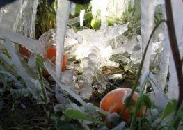 Η Πανελλαδική Επιτροπή Μπλόκων για τις μεγάλες ζημιές από την κακοκαιρία στη φυτική παραγωγή