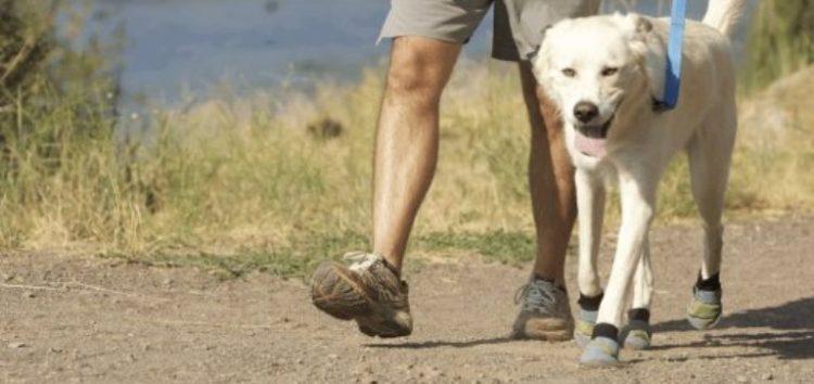 Λουρί στη βόλτα: Είναι απαραίτητο;
