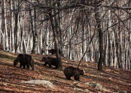Ξύπνησαν οι αρκούδες στο Καταφύγιο του Αρκτούρου (pics)