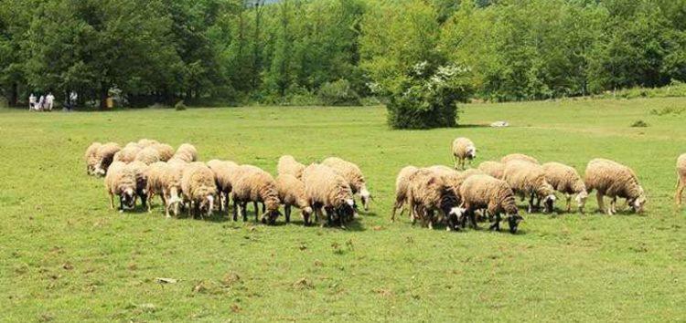 Ας δώσουμε μια διαφορετική ευκαιρία στην ελληνική κτηνοτροφία…