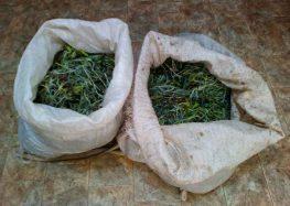 Σύλληψη δύο αλλοδαπών που είχαν συλλέξει από δασική περιοχή της Κρυσταλλοπηγής 16 κιλά τσαγιού