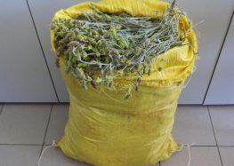 Συνελήφθη αλλοδαπός που είχε συλλέξει από δασική περιοχή της Φλώρινας πάνω από 14 κιλά τσάι βουνού