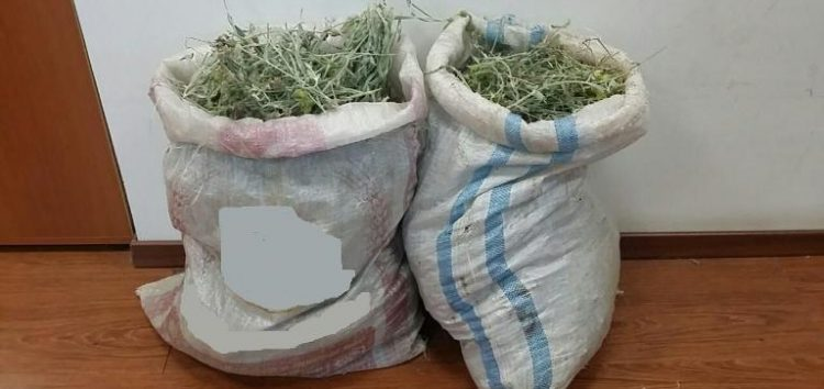 Συνελήφθησαν και πάλι αλλοδαποί για παράνομη συλλογή τσαγιού!