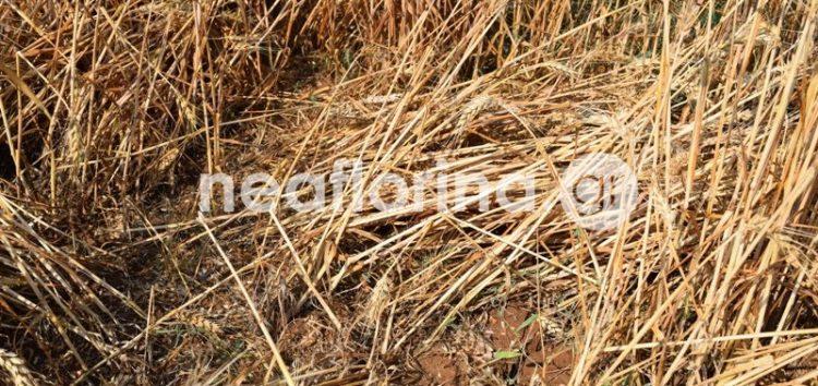 Άγιος Βαρθολομαίος: εικόνες καταστροφής στις καλλιέργειες από το χαλάζι (video, pics)