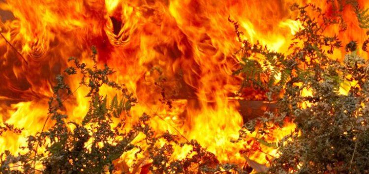 Δασική πυρκαγιά στο Βροντερό