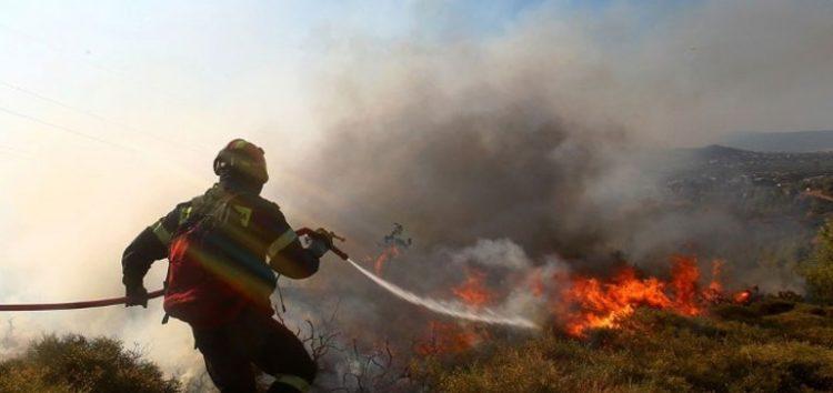 Φωτιά σε δασική έκταση του Βροντερού Πρεσπών
