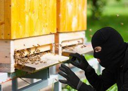 Σύλληψη δύο ατόμων στο Αμύνταιο για κλοπή κυψελών μελισσών