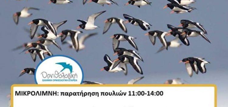 Η «Ευρωπαϊκή γιορτή πουλιών 2017» στην Πρέσπα