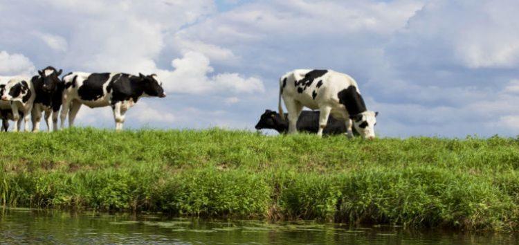 Διευκρινήσεις για τις συναλλαγές των ζώντων ζώων, μεταξύ κτηνοτρόφων και εμπόρων