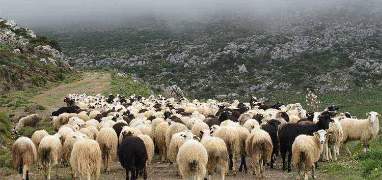 Κατανομή βοσκότοπων σε δικαιούχους κτηνοτρόφους από το δήμο Φλώρινας
