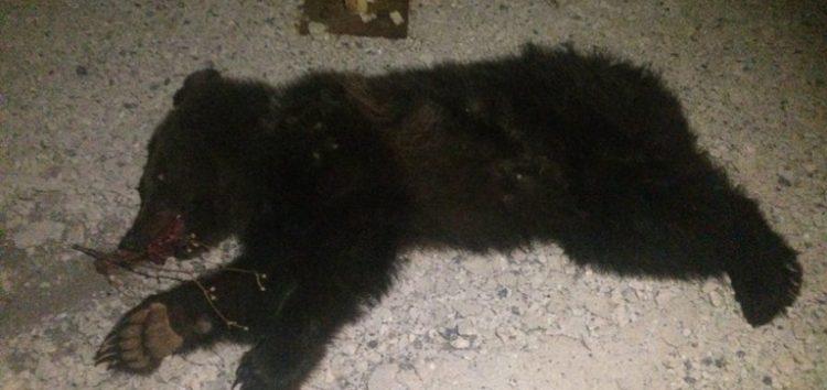 Τρίτο θανατηφόρο τροχαίο σε τρεις μήνες με θύμα αρκουδάκι στο Κλειδί Αμυνταίου (pics)