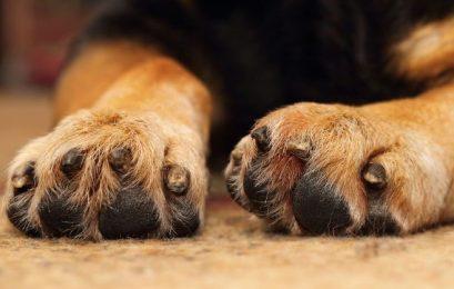 Χάθηκε σκύλος στην Κλαδοράχη