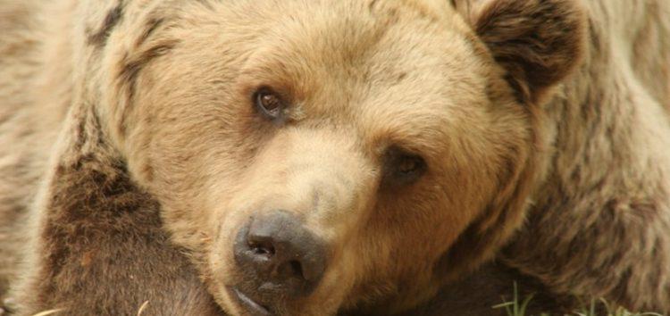 Πέθανε ο Μήτσος, ο «μεγάλος δραπέτης» του Αρκτούρου