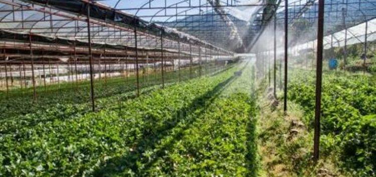 Ζητείται εργάτης για φυτώριο – θερμοκήπιο