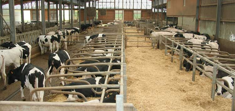 Ανακοίνωση για τις άδειες διατήρησης κτηνοτροφικών εγκαταστάσεων