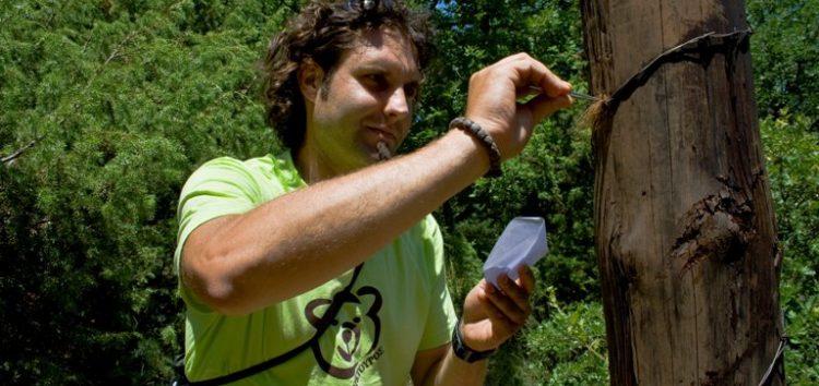 Ο Αρκτούρος δημοσίευσε την πρώτη ολοκληρωμένη γενετική μελέτη της καφέ αρκούδας στην Ελλάδα (video, pics)