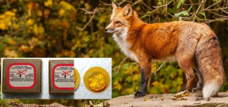 Εαρινό πρόγραμμα εναερίων ρίψεων εμβολίων – δολωμάτων κατά της λύσσας, για τον εμβολιασμό της άγριας πανίδας