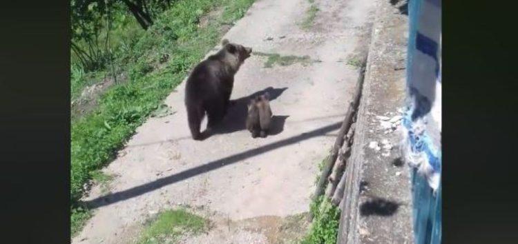 Η… αποχώρηση των αρκούδων από τη Δροσοπηγή (video)