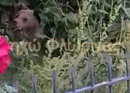 Η Αποκεντρωμένη Διοίκηση Ηπείρου – Δυτικής Μακεδονίας για το περιστατικό με την εμφάνιση αρκούδων στη Δροσοπηγή