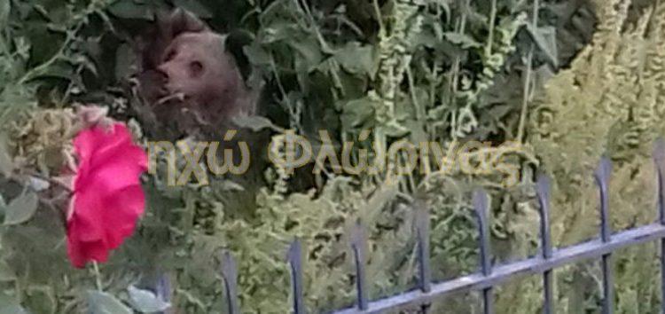 Αρκούδα γέννησε δύο αρκουδάκια σε αυλή σπιτιού στη Δροσοπηγή! (pics)
