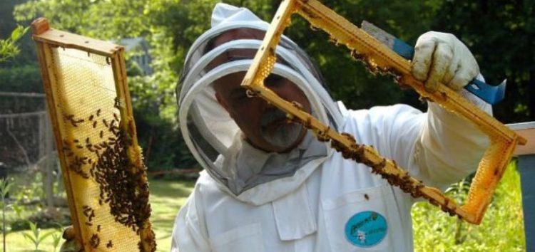 Εκπαίδευση μελισσοκομίας στο Ξινό Νερό