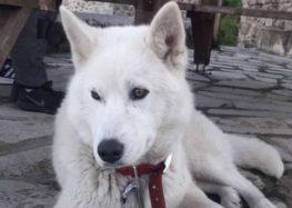 Βρέθηκε σκύλος στο Κρατερό