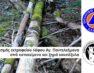 Συλλογή κατακείμενων και ξηρών καυσόξυλων από τον χώρο του εκτροφείου του λόφου Αγίου Παντελεήμονα