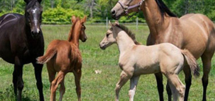 Κρούσμα πυρετού του Δυτικού Νείλου σε άλογο στη Φλώρινα
