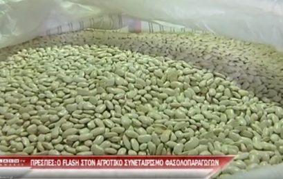 Ο FLASH στους φασολοπαραγωγούς Πρεσπών (video)