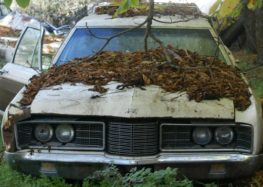 Σε εξέλιξη το πρόγραμμα απομάκρυνσης εγκαταλελειμμένων αυτοκινήτων από τον δήμο Αμυνταίου