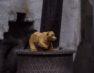Η «περιπλανώμενη Αρκούδα» του προπτυχιακού καλλιτέχνη Αγησίλαου Ρόμπολα στην αναπαράσταση της φωτιάς στη Σκοπιά