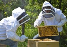 Γενική συνέλευση του Μελισσοκομικού Συλλόγου Δήμου Αμυνταίου