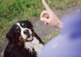 Εκπαίδευση εντολών σκύλου – τα 8 συστατικά της επιτυχίας