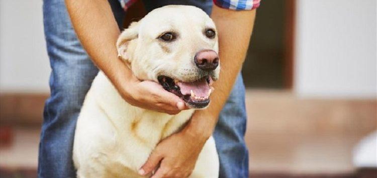 Σκύλος και χάδι – ποια η σημασία του;