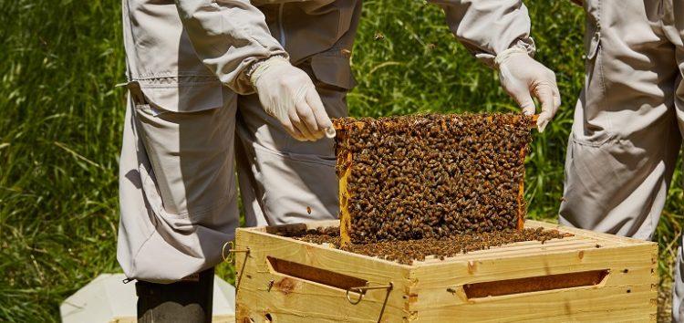 Διαδικασία εγκατάστασης μελισσοκόμων σε προεπιλεγμένες θέσεις σε αποκατεστημένες εκτάσεις του ΛΚΔΜ