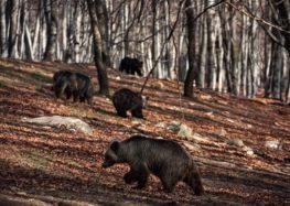 Ξύπνησαν οι αρκούδες στο καταφύγιο του «Αρκτούρου» στο Νυμφαίο