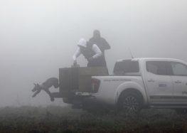 Ο «Αρκτούρος» επέστρεψε στο φυσικό περιβάλλον πέντε ορφανά αρκουδάκια (pics)